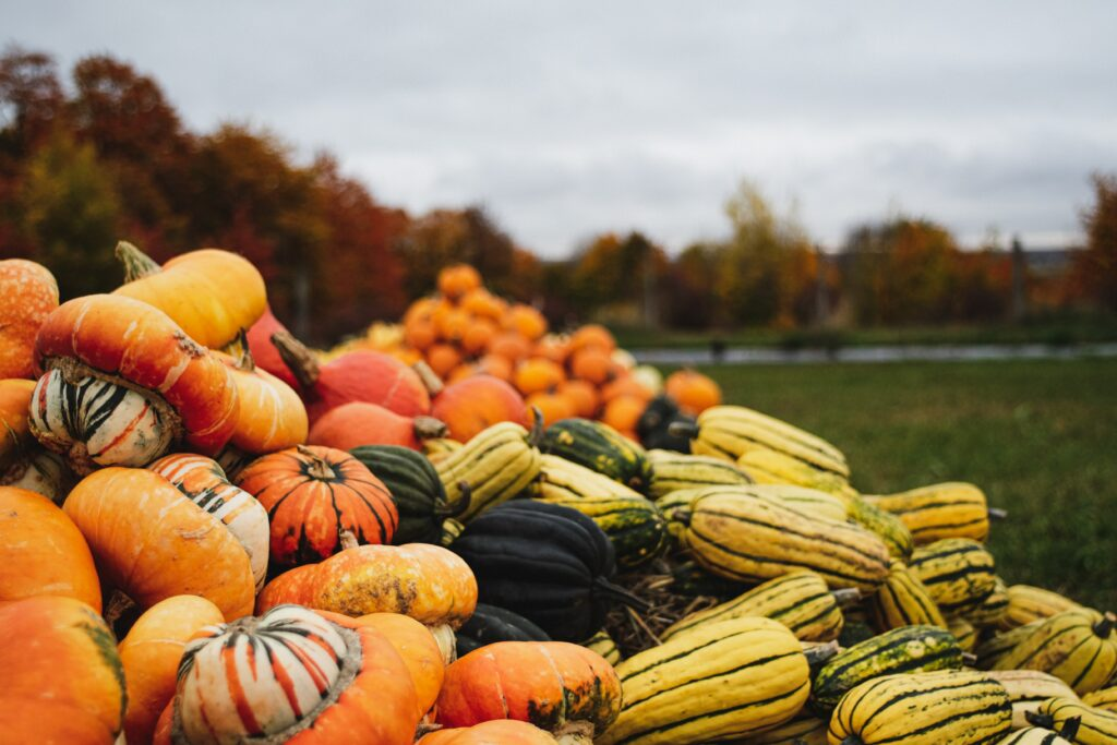 Kürbisse Herbsthochzeit