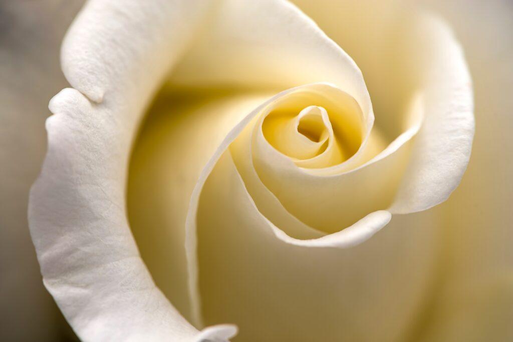 Rosenhochzeit - der 10. hochzeitstag